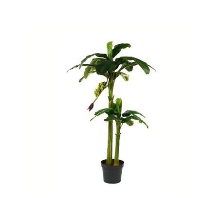 Location de plantes tropicales bananier facile for Bananier artificiel pas cher