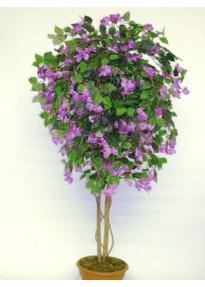 Bougainvillé violet mini tige